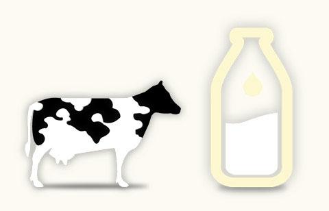 Pour produire un litre de lait, il faut...