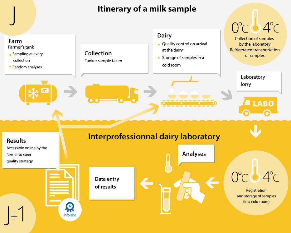 Itinéraire d'un échantillon d'analyse de lait