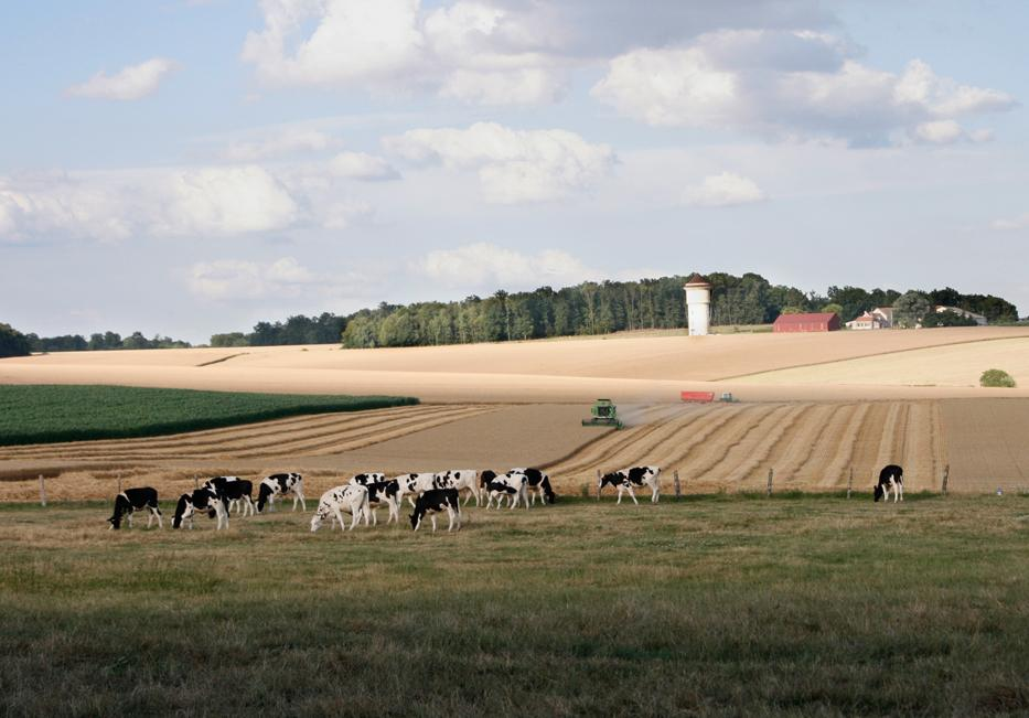 Le champ de blé
