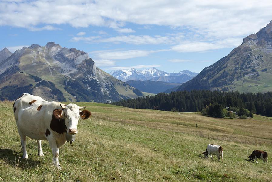 The diversity of dairy farmland