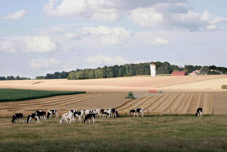 De vastes surfaces agricoles