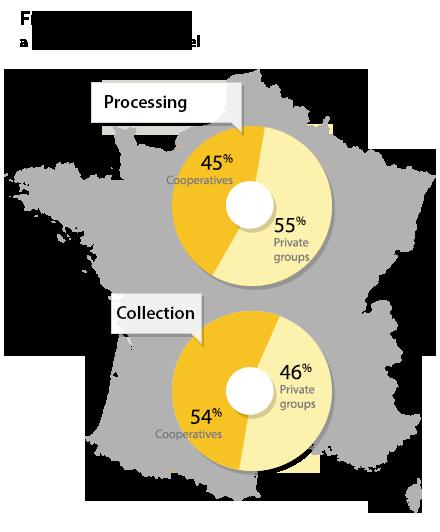 Transformateurs et coopératives en France : collecte et transformation